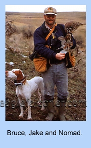 Falconer, Bruce Haak with his Pointer and Prairie Falcon