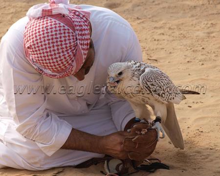 arab pornostjerne Falconer koncerter