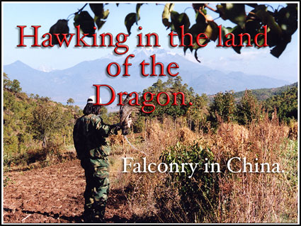 Falconry Talk, Hawking in the land of the Dragon