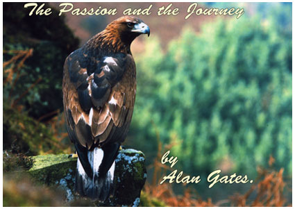 Falconry Talk, A Passion and the Journey