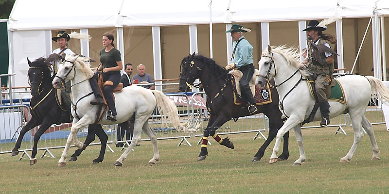 Rosenburg Horses at the Festival of Falconry