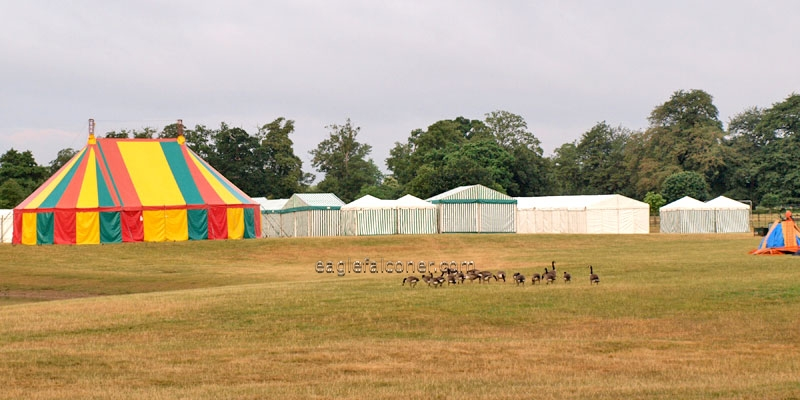 Festival of Falconry national tents