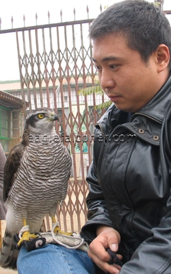 WuDi Chinese Falconer