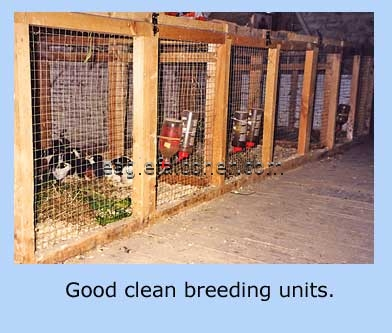 Rabbit breeding pens