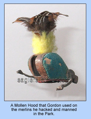 Mollen Merlin falconry hood