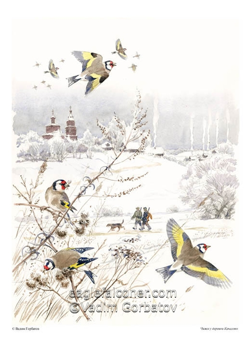 Goldfinches in Russia